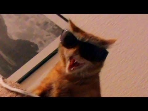 cat5 vs cat 7