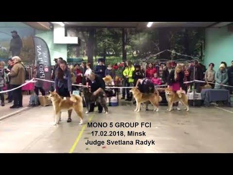 #MONO V GROUP 17.02.2018 | #AKITA INU #DOG SHOW BELARUS MINSK | #АКИТА ИНУ ВЫСТАВКА СОБАК БЕЛАРУСЬ