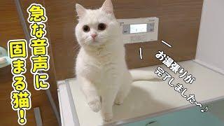 お湯張りの音声にビックリする猫が可愛すぎた…!!!