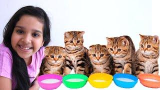 شفا تلعب مع  القطط الصغيرة  كيوت !!