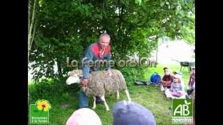 le mouton (2) - Ferme OrBIOn
