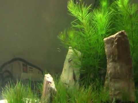 My first aquascape/aquarium tour