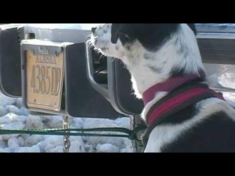 North American Sled Dog Championship Race