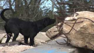 Disaster Canine Specialist Course