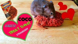 COCO Hamster Treat Time! (Hagen Strawberry) Thumbnail