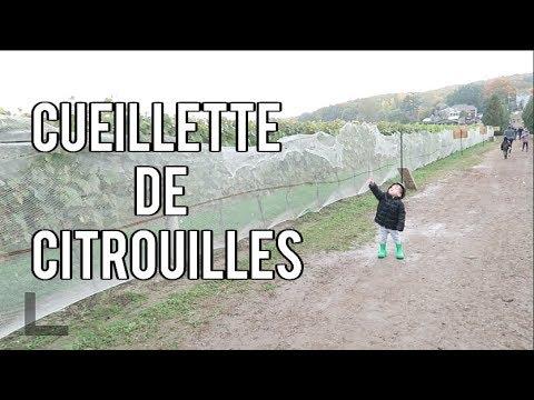 08/10/2018: Première Cueillette De Citrouilles