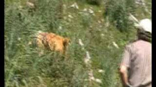 Campeón concurso perros de rastro Nava 2009