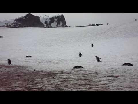 Jasons Journeys - Antarctica Pt 2 (HD)