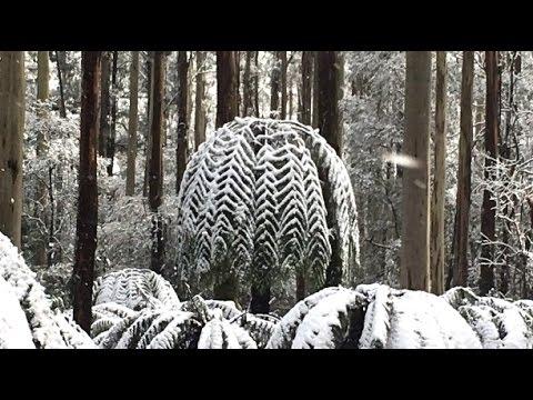 Tropical Australia Freezes & Atmospheric Compression Hail Deluges Planet Wide (177)