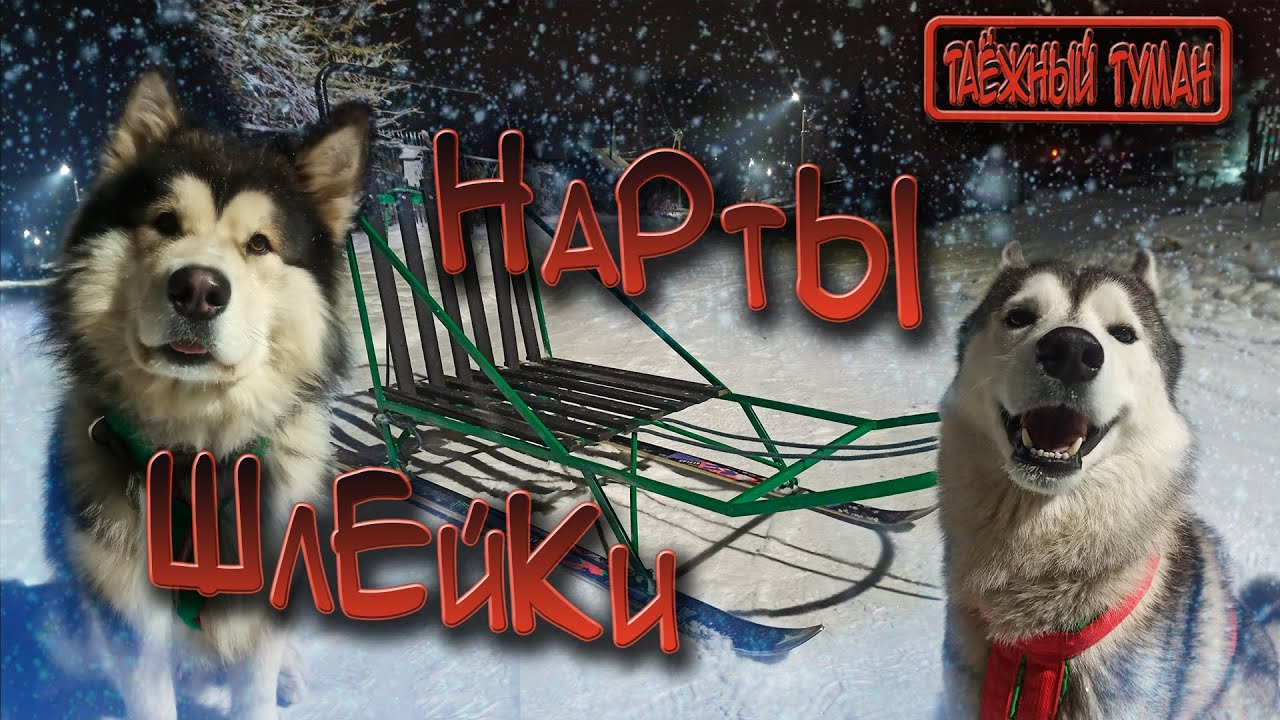 Обзор шлеек и нарт для ездовых собак   Самодельные нарты   Ездовые шлейки
