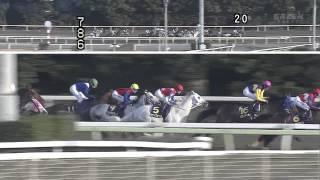 2013 東京スプリング盃(フジノウェーブ)HD