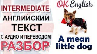 A Mean Little Dog - Маленькая гнусная собачка 📘 Intermediate English text | АНГЛИЙСКИЙ OK English