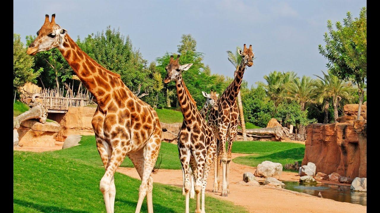 Top 10 Best Zoos In Europe