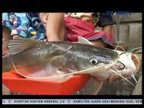 Menjemput Fajar: Pencari Ikan Baung