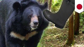 秋田県鹿角市の山林で5月29日午前9時前、女性がクマに襲われ、全治1週間...