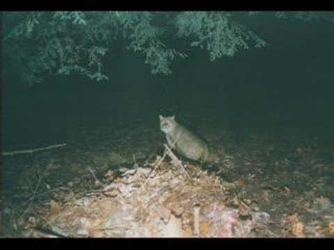 Pennsylvania Wildlife - YouTube