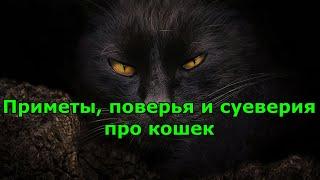 Приметы, поверья и суеверия про кошек.