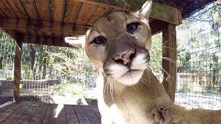 Selfies At Big Cat Rescue