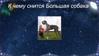 К чему снится Большая собака (Сонник)