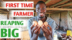 How I Started a Poultry Farm With Little Money and No Experience | My Success Story