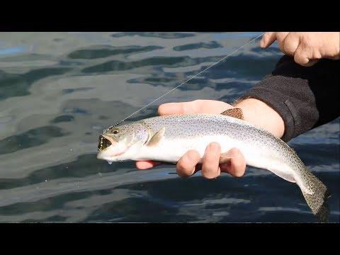 Fishing for Oregon