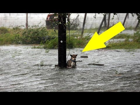 Meet Lucky the dog who was saved during Hurricane Harvey !