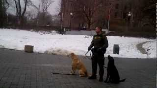 Cyopro At Queens Park, Toronto - Mnr Canine Teams Demonstrating Obedience - February 2013