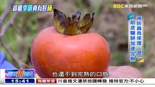 這個季節真有「柿」 觀光轉型積極搶市《海峽拚經濟》@東森新聞 CH51