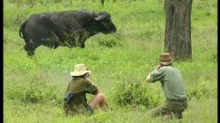 The Cape Buffalo - Hunters Video
