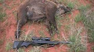 Wild Hogs in Crowell that I Shot