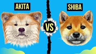 Akita vs Shiba Inu Differences ( Detailed Comparison )