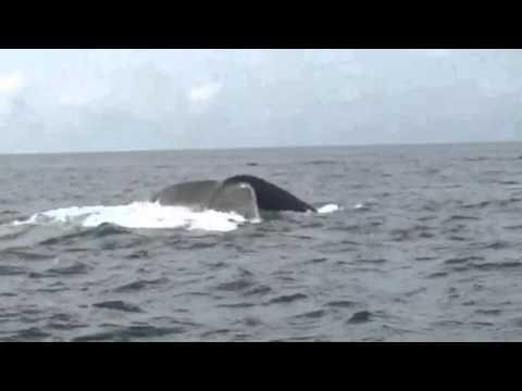 Whale dive deep