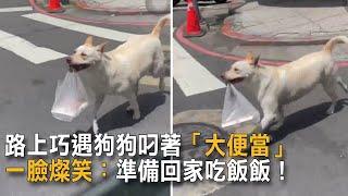 路上巧遇狗狗叼著「大便當」 一臉燦笑:準備回家吃飯飯!|狗狗搞笑|自己買便當