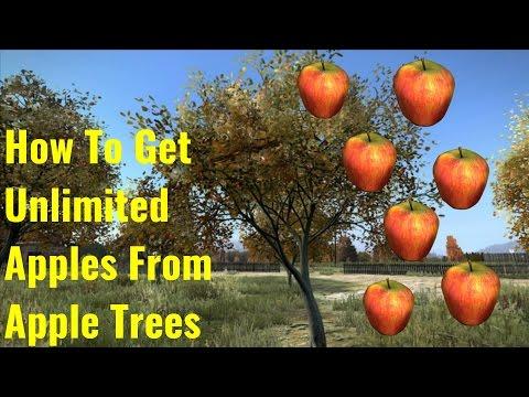 Как собирать яблоки в dayz