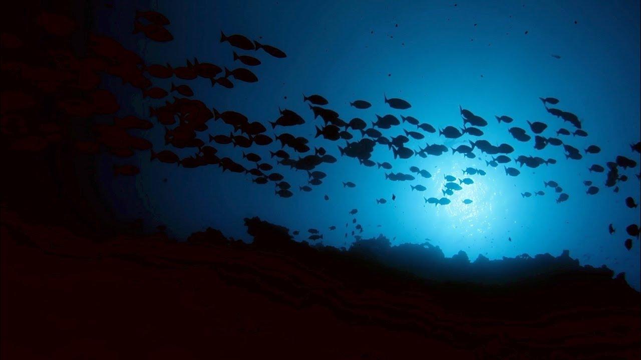 ラロトンガ島の海の世界へ ダイビング映像