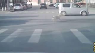 Сбили собаку в самом центре Тюмени
