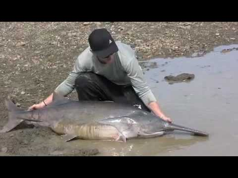 Paddlefishing In North Dakota