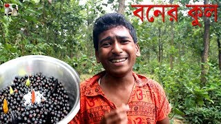 Collect & Prepare Black Natural and Healthy Jujube Fruit from Indian Forest by Amazing Boys