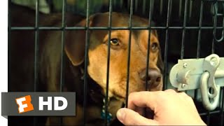 A Dog's Way Home (2018) - Goodbye, Bella Scene (1/10) | Movieclips