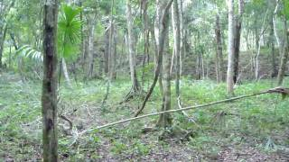 Exploración Maya 98, Xultún, Guatemala, Eduardo González Arce