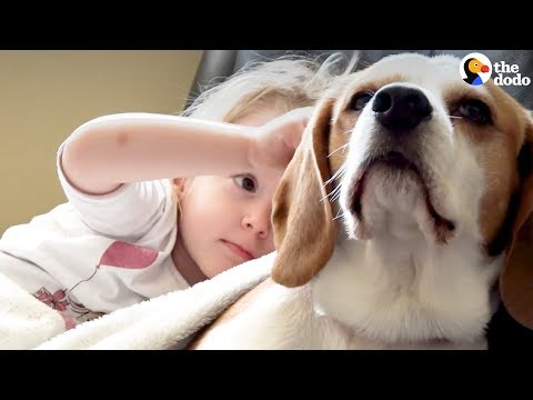 Girl Surprises Her Beagle Dog With A Puppy Sister | The Dodo