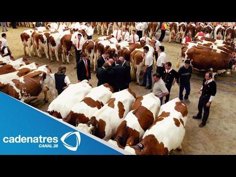 Recupera Chihuahua certificado para exportar ganado a EU