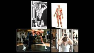 10 FACTS ABOUT THE MUSCULAR SYSTEM