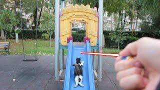 Cat vs Laser Pointer !