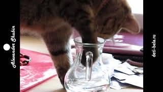 как истинная британская кошка пьет воду - кошки смешное видео - приколы с кошками