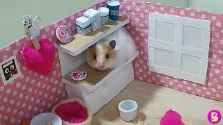 ХОМЯЧКИ ждут ГОСТЕЙ в НоВОМ домике Hamsters are waiting for guests