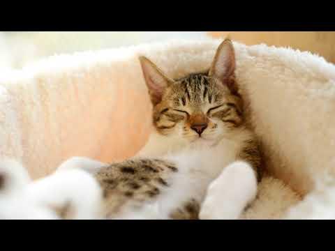 Как приучить кошку спать на своем месте
