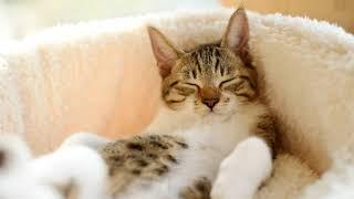 Как приучить кота спать на своем месте в другой комнате без стресса?