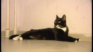 Друг семьи. «Черно-белый кот»