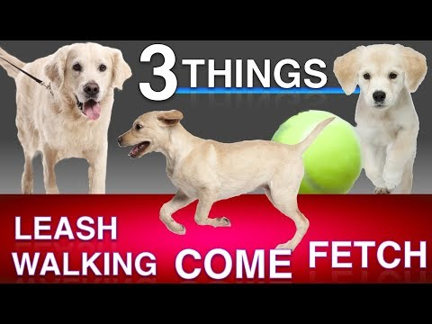 Training 3 Things: Come When Called, Leash Walking and Fetch!